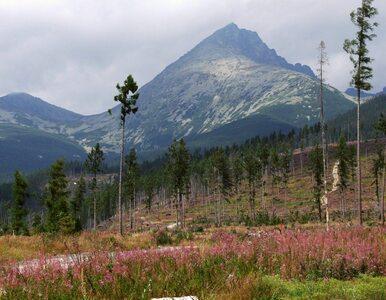 Polski turysta zginął w Tatrach. Schodził w niedozwolonym miejscu