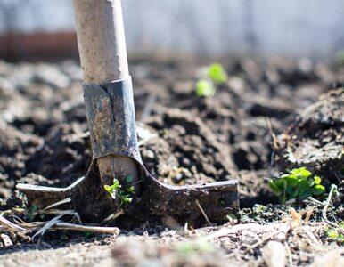 Zalety zdrowotne płynące z ogrodnictwa – to może cię zaskoczyć