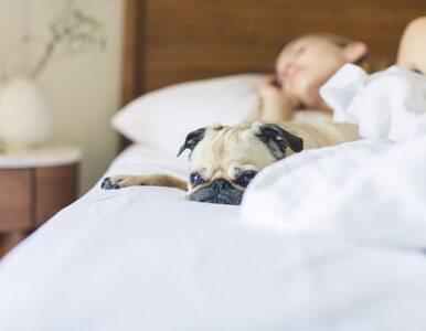 Naukowcy radzą: wygoń z łóżka swojego partnera i śpij z psem....