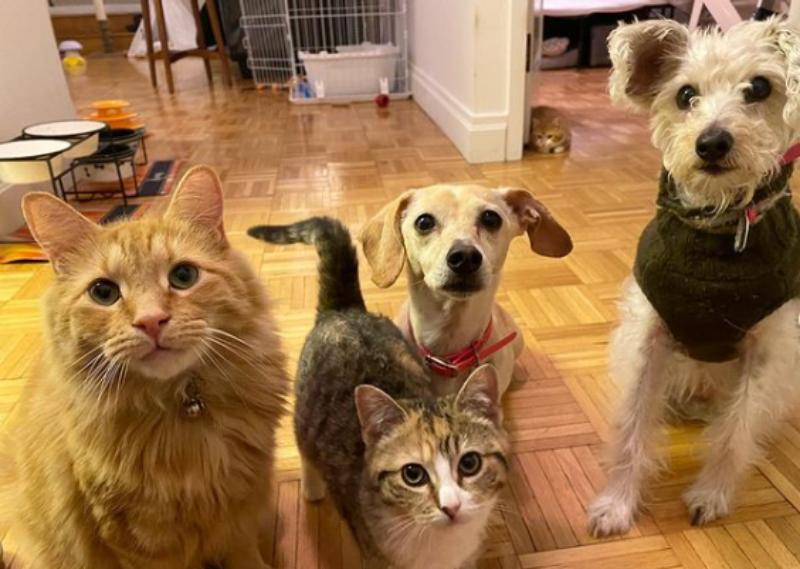 """Pies Kona """"zaadoptował"""" małe kociaki"""