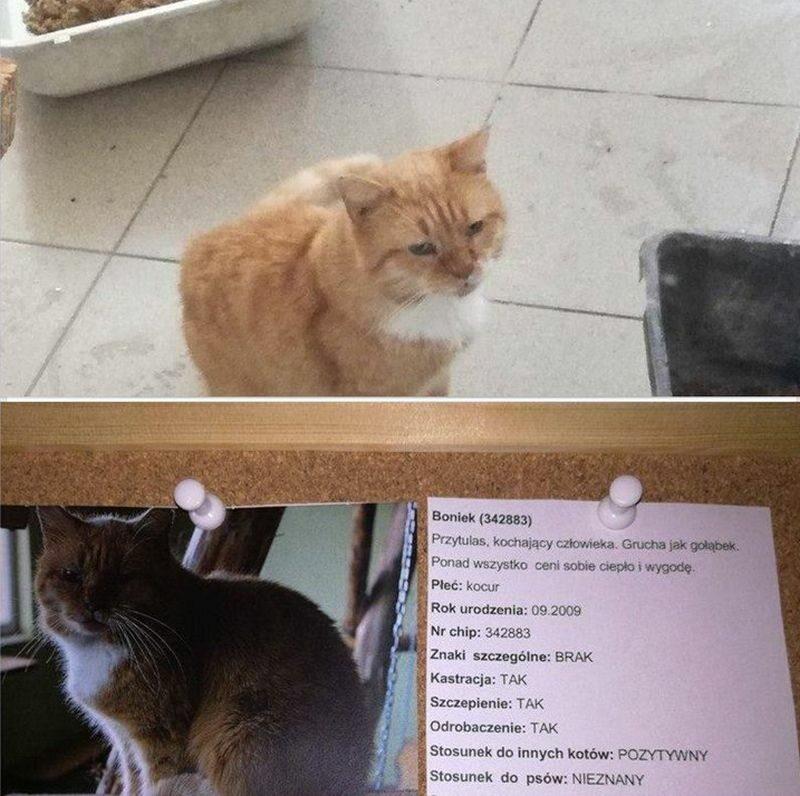 Kot Boniek