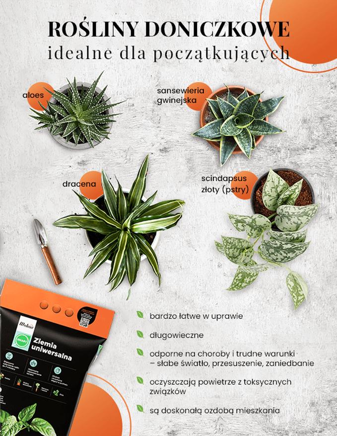 Rośliny doniczkowe idealne dlapoczątkujących – infografika