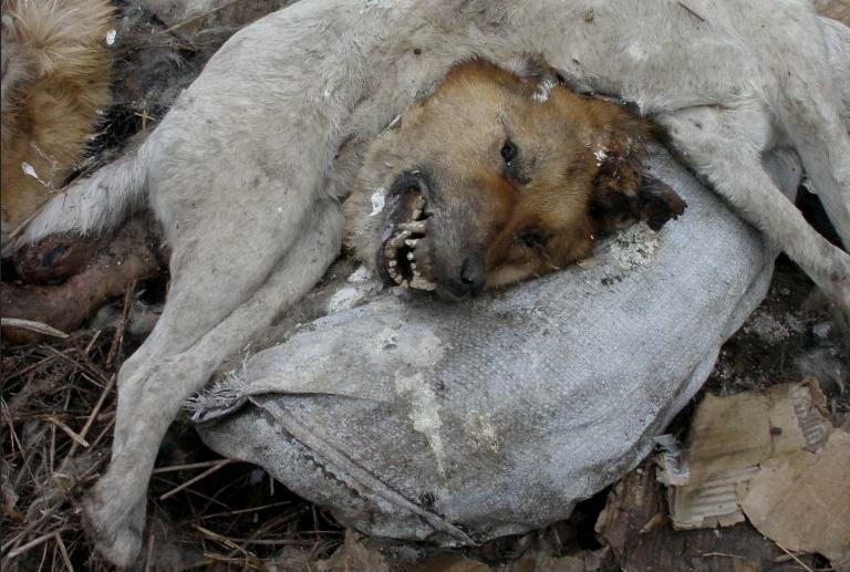 Więcej zdjęć: http://www.stopmordowaniu.pl