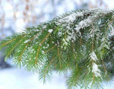 Prognoza pogody na Boże Narodzenie: będzie ciepło i mokro