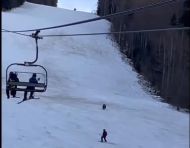 Niedźwiedź gonił narciarza. Pojawiło się nagranie