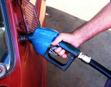 Prognozy gospodarcze na 2019 rok: Diesel poniżej 5 zł za litr