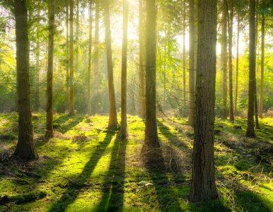 Naukowcy apelują o ochronę lasów przed zmianami klimatu