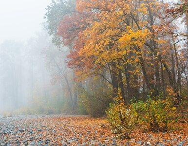 Mgły i wysokie temperatury. Jaka pogoda będzie  w najbliższy weeekend?
