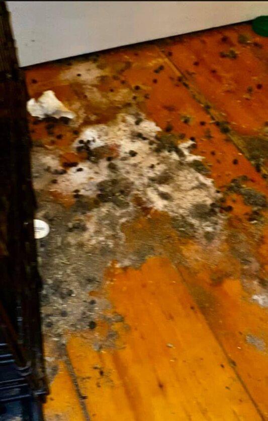 Zabytkowa podłoga całkowicie zniszczona