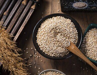 Komosa ryżowa – drogocenne ziarno pełne zalet odżywczych
