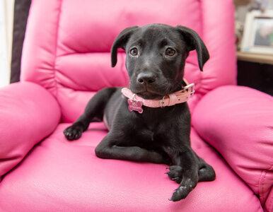 Pies z sześcioma nogami adoptowany przez prześladowanego nastolatka....