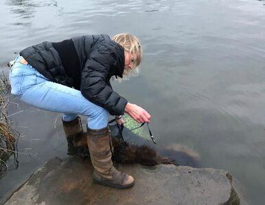 Bellę ktoś wrzucił do wody. Teraz pies ma nowych właścicieli