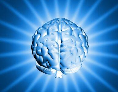 """Kanadyjczycy stworzyli """"piekielnie inteligentny"""" sztuczny mózg"""