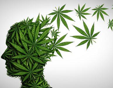 Schizofrenia po marihuanie? Duńczycy ostrzegają przed czterokrotnym...