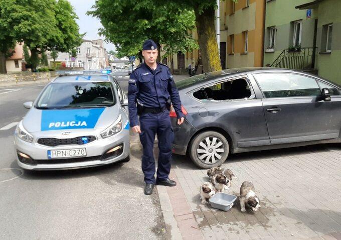 Szczeniaki uratowane przez policję