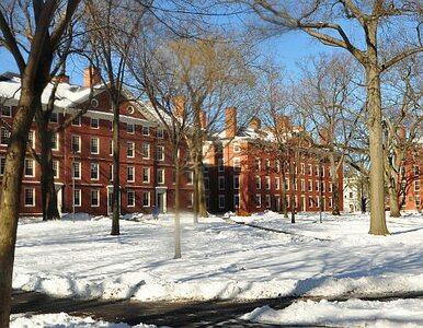 Polscy absolwenci Harvardu pomogą rodakom