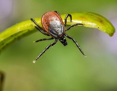 Czy komary lub kleszcze mogą rozprzestrzeniać koronawirusa?