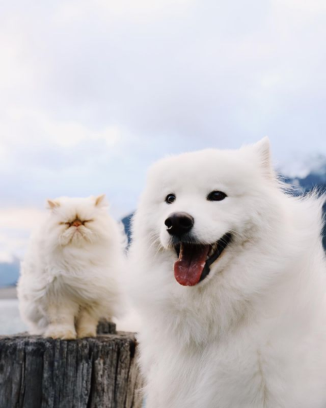 Casper i Romeo
