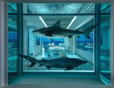 Widok na Las Vegas, basen i rekiny w formalinie. To wszystko za 200 tys....