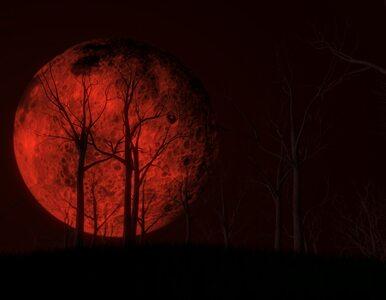 """Ludzie boją się """"czerwonego Księżyca"""". Niektórzy przepowiadają koniec..."""