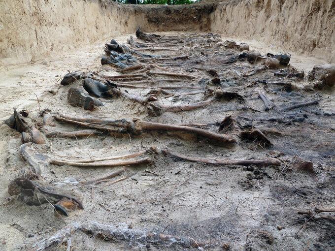 Prace przy poszukiwaniu iekshumacji niemieckich grobów wPolsce