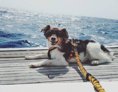 Pies jest idealnym towarzyszem podróży? Te zdjęcia są na to dowodem!
