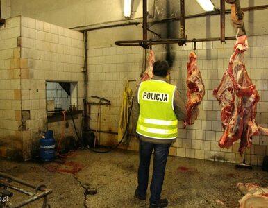 Do Szwecji trafiło mięso z polskiej ubojni, w której zabijano chore krowy