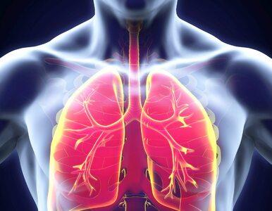 QUIZ: Układ oddechowy – ile o nim wiesz?