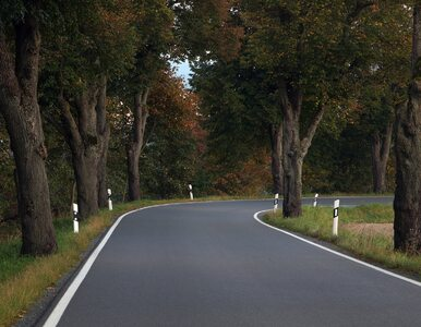 Przydrożne drzewa śmiertelnym zagrożeniem. Będzie zmiana przepisów?