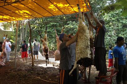 Święto Ofiarowania. Krwawa ceremonia w Indonezji