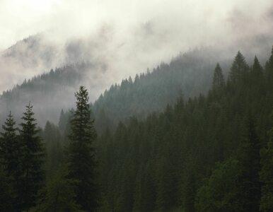 Zamknięte szlaki w Tatrach. Powodem niedźwiedzica i jej młode