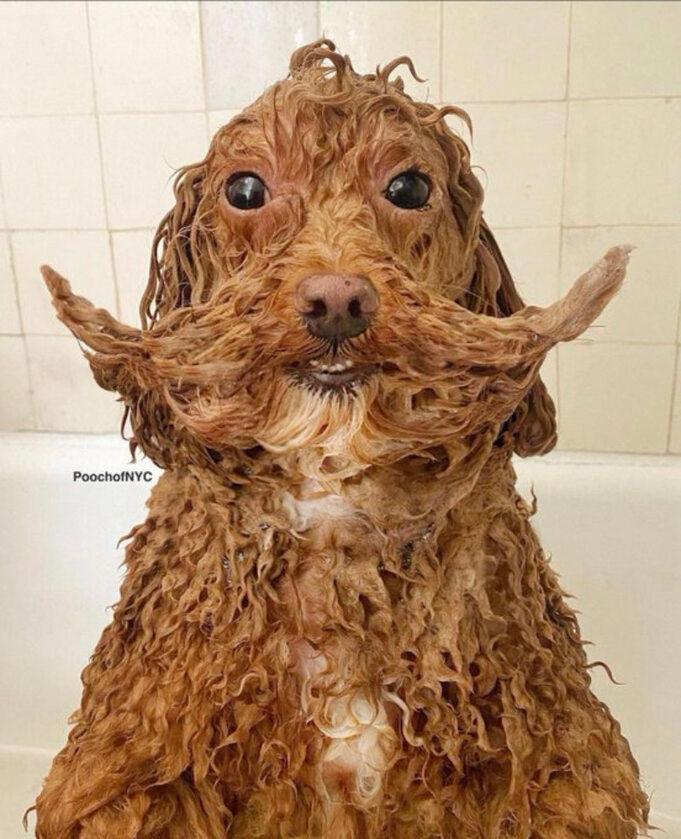 Śmieszne zdjęcie psa
