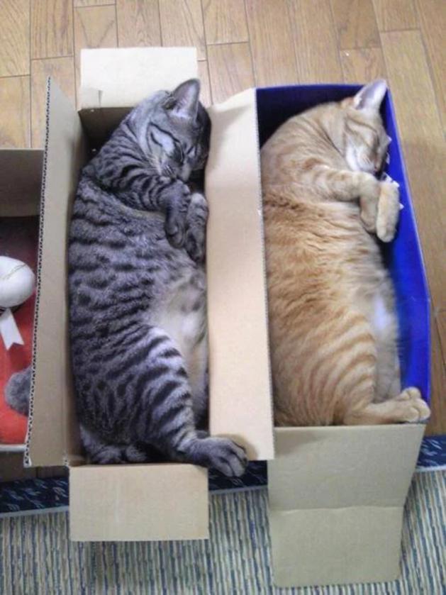 Koty w pudełkach