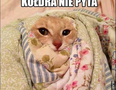 Memy na mroźną pogodę. Śmiech pomoże wam się rozgrzać w zimne dni