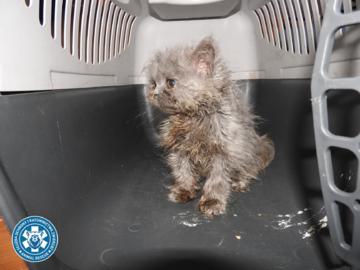 Akcja ratowania kotów przeprowadzona przez SORZ