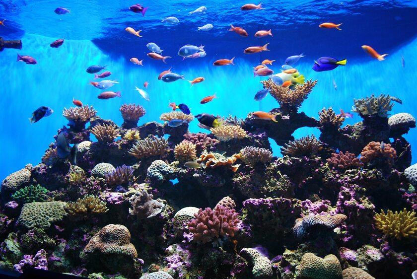 Akwarium, zdjęcie ilustracyjne