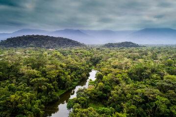 Amazoński las, zdjęcie ilustracyjne