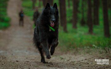 ARES - pierwszy pies ratowniczy w Wojsku Polskim