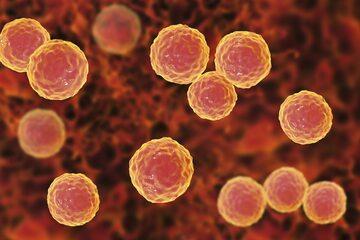 Bakterie atakujące wsierdzie