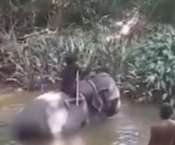 """Bestialskie znęcanie nad słoniem. """"To ich codzienność"""""""