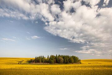 Biologizacja jest sposobem na zrównoważone rolnictwo
