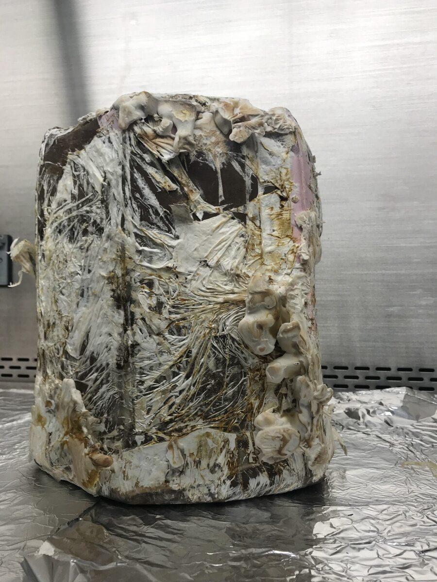 Cegły z grzybni