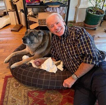 Champ i Major – psy Bidenów, które zamieszkają w Białym Domu