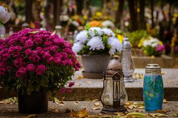Chryzanemy na cmentarzu, zdjęcie ilustracyjne