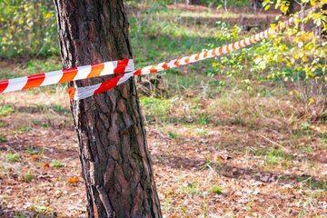 Ciało znaleziono w lesie, zdjęcie ilustracyjne