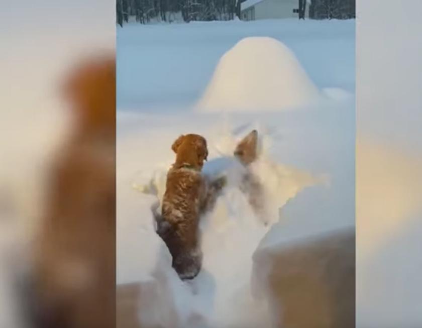 Czworonogi i ich zabawa w śniegu