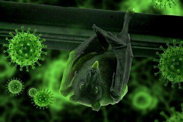 Czy to nietoperze są źródłem pandemii covid-19? Nowe odkrycie naukowców