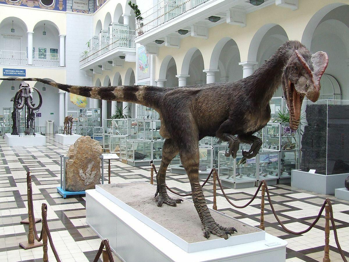 Dilofozaur, Muzeum Geologiczne Państwowego Instytutu Geologicznego, Warszawa