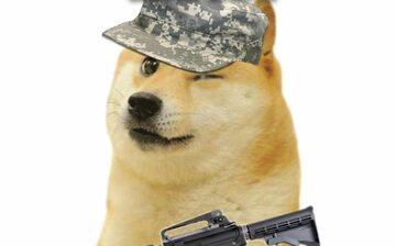 Doge gotów na wojnę