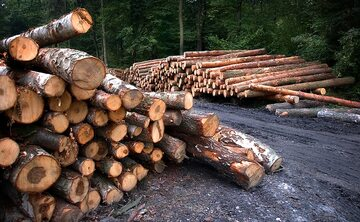 Drewno, wyrąb lasu